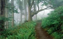 Soleil en forêt 7