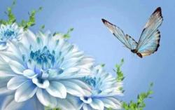 Fleurs et papillon 2