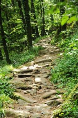 Chemin en forêt 7