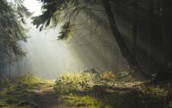 Chemin en forêt 8
