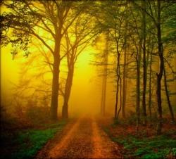 Soleil en forêt 4