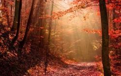 Chemin en forêt 6