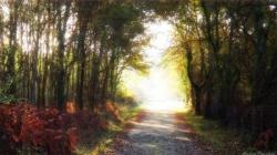 Chemin en forêt 3