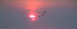 Soleil levant 5