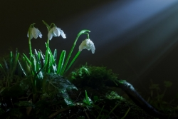 Fleurs blanches 2