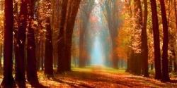 Soleil en forêt 2