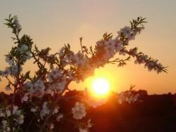 Soleil levant 2
