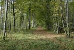 Chemin en forêt 2