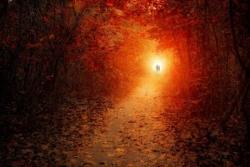 Chemin en forêt 5