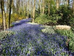 Chemin de fleurs 1