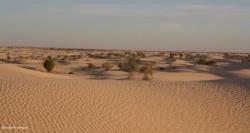 vue sur le désert