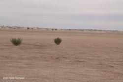 Le désert autrement