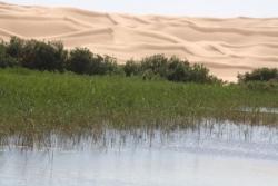 Une source d'eau chaude au coeur du désert : le TO