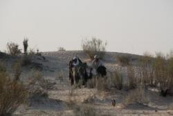 Nos amis nomades reviennent au campement