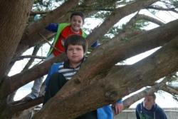 récréé dans les arbres