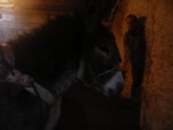 Petit âne broie l'olive...