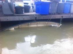Barquet de P. thimothée sous l'eau