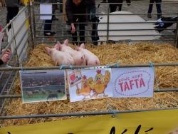 Les cochons ont eu beaucoup de succès