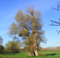 L'arbre creux
