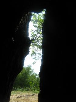 De l'arbre creux