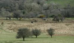 Un paysage de bocage et de lande © Bernard Rio