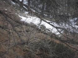 un chevreuil au pied du chalet. fin mars 2012