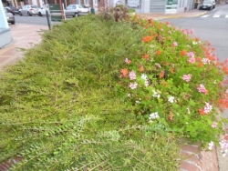 nature et fleurs septembre à décembre 2014