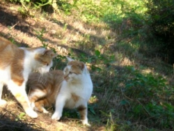 le 21 août 2008, bilan des chats