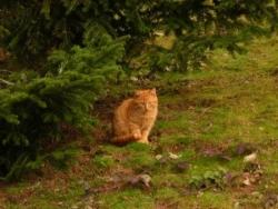 Les chats de Boisseuil