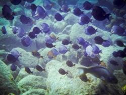 5 Snorkeling à St Barth
