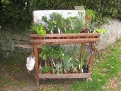 Plantes en libre service...