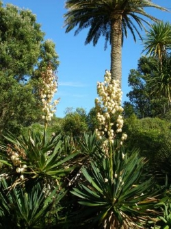 jardin botanique de Tresco