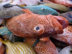 9 Marché au poisson