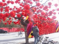 Jolies fleurs rouges !