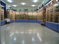 Le musée d'Histoire Naturelle