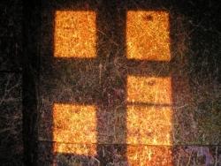 Crépuscule sur rhizome