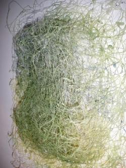 bloc d'herbes