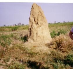 15-termitiere.3