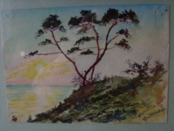 Les pins sur la mer