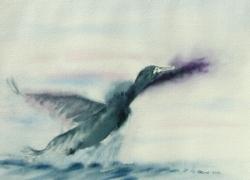Cormoran - Aquarelle - 26x36