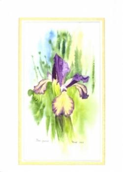 Iris - Aquarelle - 30x40