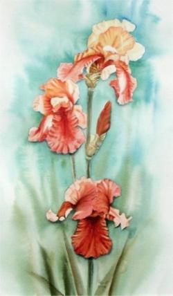 Iris - Aquarelle - 50x30