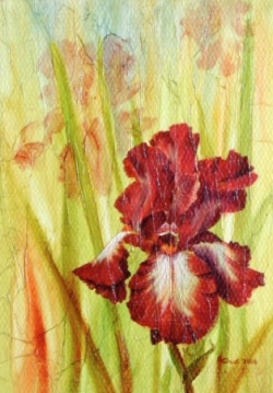 Iris - Technique mixte - 27x19