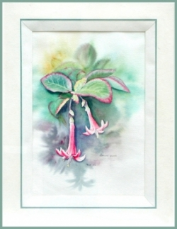 Lonicera - Aquarelle - 54x69