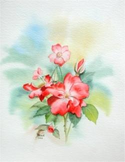 Roses - Aquarelle - 36x42