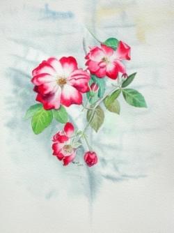 Roses - Aquarelle - 41x49
