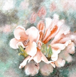 Rhododendron - Huile - 50x50