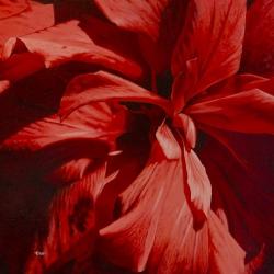 Hibiscus - Huile - 50x50