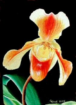 Orchidée - Huile - 27x19
