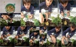 Jardinage écologique à La Marsa